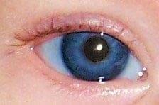 Violetit silmät. Kuva: C hamiltonkolb, Wikimedia Commons